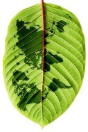 leaf_veios